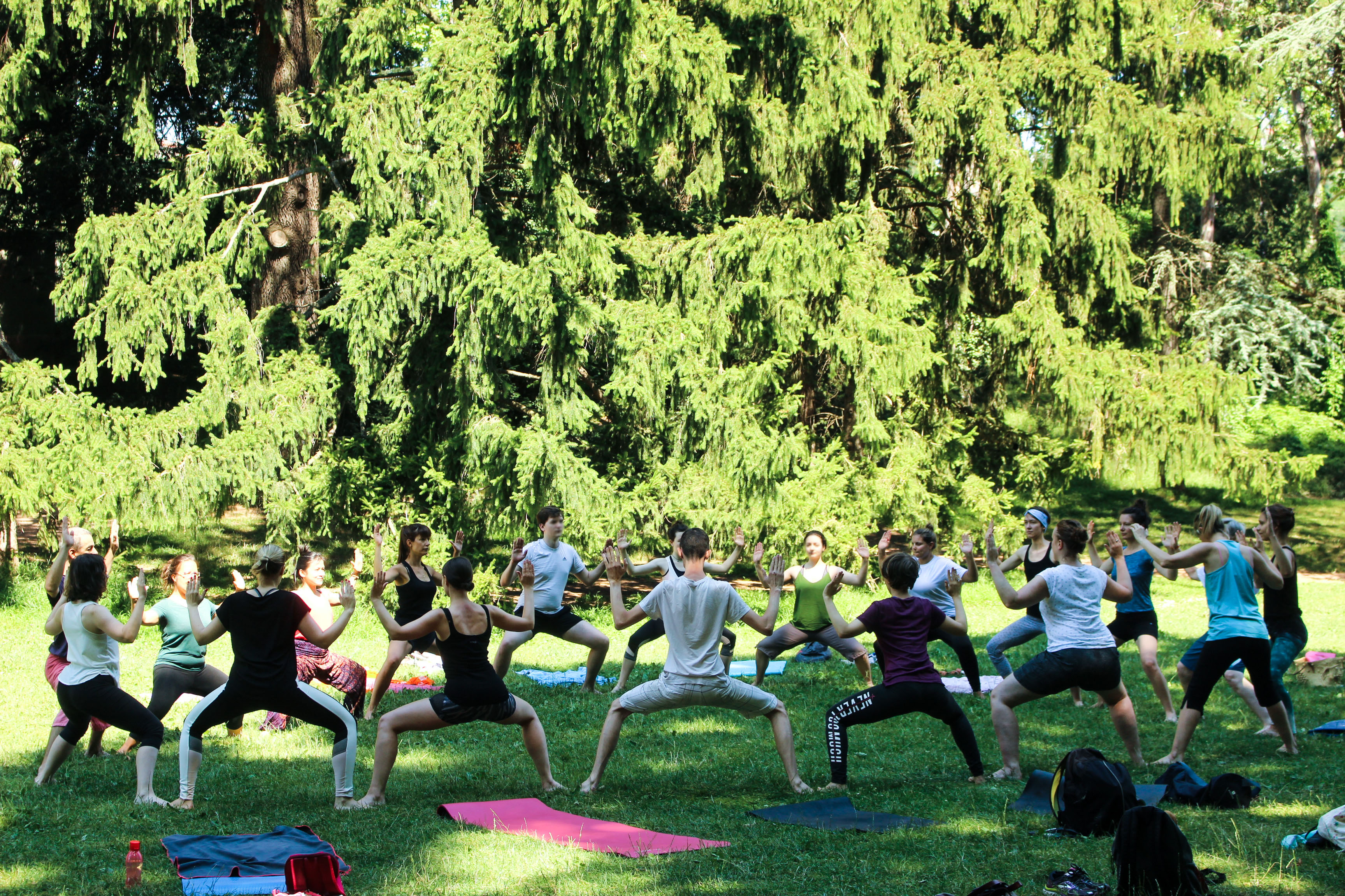 Yoga plein air en juin (modification)