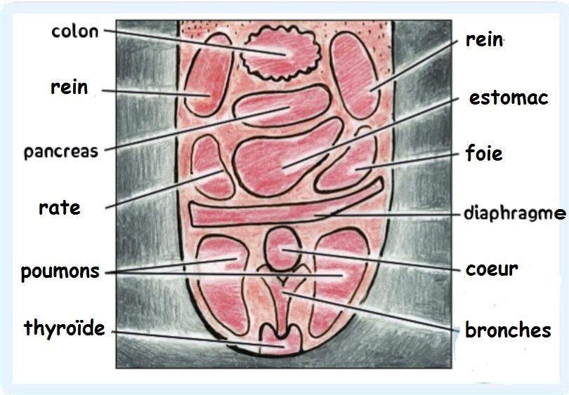 Carte de la santé par la langue