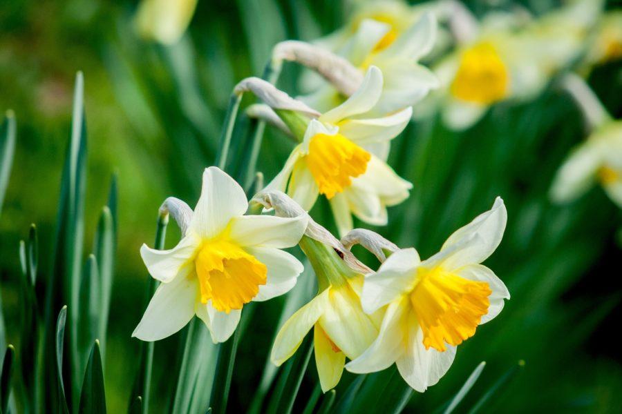 Recommandations ayurvédiques pour le printemps